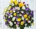 Cây hoa Panse